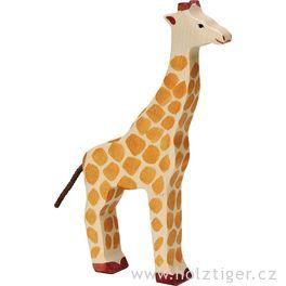 Žirafa – zvíře zedřeva