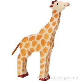 Žirafa sezvednutou hlavou – zvíře zedřeva